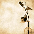 Milk Weed In A Bottle by Bob Orsillo