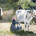 Milking, 19th Century by Granger