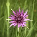 Milkweed Flower by Jim Thompson
