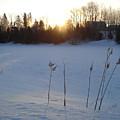 Milkweed In February At Sunrise by Kent Lorentzen