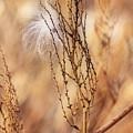 Milkweed In The Breeze by Deborah Benoit