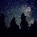 Milky Way Above Northern Forest 22 by Lyle Crump
