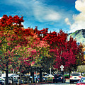 Mill Valley Autumn by Brian Tada