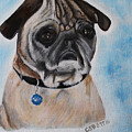 Millie The Pug 2016 by Candy Bott