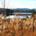 Millinocket Lake by Katina Cote