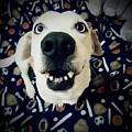 Milo The Basset by Brandi Tye
