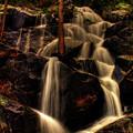 Quaking Aspen Falls Along Tioga Pass  by Roger Passman