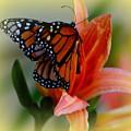 Mingle With A Monarch by Kimberly Woyak