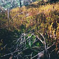 Mini-forest by Alisa Suleymanova