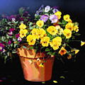 Mini Pansy Pot by Robert Foster
