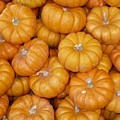 Mini Pumpkins Card by Carol Groenen