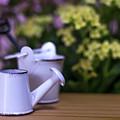 Miniature Gardening Kit With Pink And Yellow Kalanchoe Backgroun by Eiko Tsuchiya