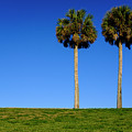 Minimal Palm Trees On A Hill In Saint Augustine Florida by John McLenaghan
