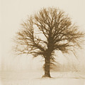 Minimal Winter Tree by Dan Sproul