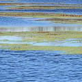Brazos Bend Wetland Abstract by Katrina Lau