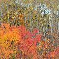 Minnesota Autumn 55 by Kimberly Benedict
