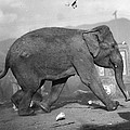 Minnie The Elephant, 1920s by Granger