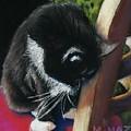 Kitty Chair by Minaz Jantz