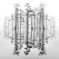 Mirror Mirror 02 by Jim Dollar