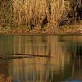 Mirror Spring 2 by Douglas Barnett