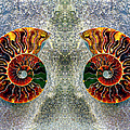 Mirrored Ammomite - 8305 by Paul W Faust - Impressions of Light