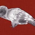 Mischievous Bird by Claire Kemp