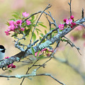 Miss Chickadee by Lori Deiter