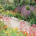 Mission Garden by Carol Groenen