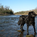 Mississippi River Dog On The Rocks by Kent Lorentzen