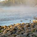 Mississippi River Duck Duck Dawn by Kent Lorentzen