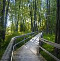 Mississippi Riverwalk Trail - Carleton Place, Ontario by Rick Shea