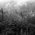 Mist And Trees In Group Of Seven Country  by Christine Montague
