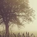 Mist by Odd Jeppesen