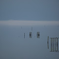 Mist On The Bay  by Paula OMalley