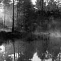 Mist On The Pond by Suzanne Gaff