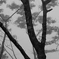 Mist by Stefan Breton