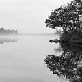 Misty Cove by Luke Moore