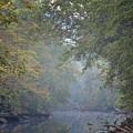 Misty Creek by Dale Wilson