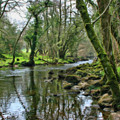 Misty Day On River Teign - P4a16017 by Dean Wittle