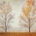 Misty Duo by Leda Robertson