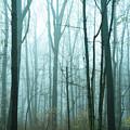 Misty Forest by John Greim