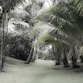 Misty Hawaiian Garden by Roger Mullenhour