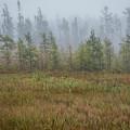 Misty Landscape by Patti Deters