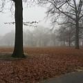 Misty by Melissa Brodman