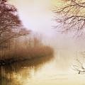Misty Morn by Jessica Jenney