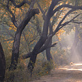 Misty Morning, Bharatpur, 2005 by Hitendra SINKAR