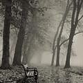 Misty Morning by Ilco Trajkovski