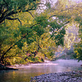 Misty Morning On Nariel Creek by Lexa Harpell