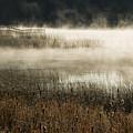 Misty Morning by Peter Olsen