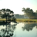 Misty Morning Pond by Michael Thomas